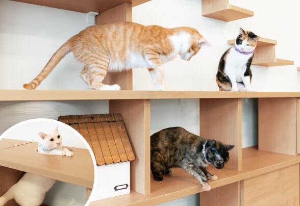 ペットが喜ぶ木製棚とキャットウォーク